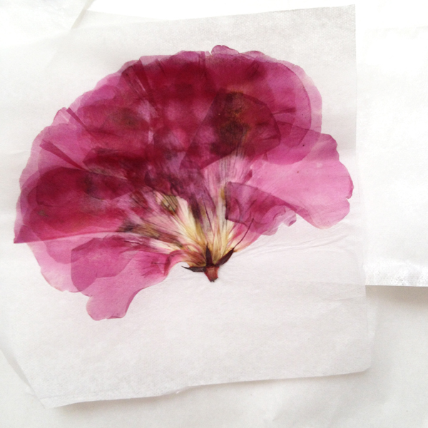 the-red-thread-flower-pressing